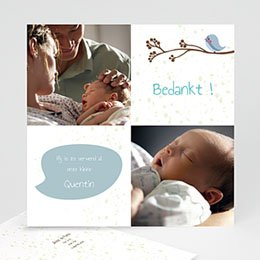 Bedankkaartje geboorte zoon Fluitende vogel jongen