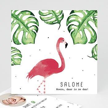 Geboortekaartje meisje - Flamingirl - 0