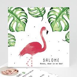 Aankondiging Geboorte Flamingirl